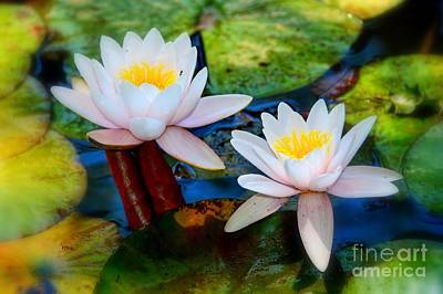 Photograph - Pond Lily by Patrick Witz