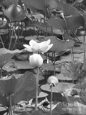 Photograph - Pond by Melissa Lightner
