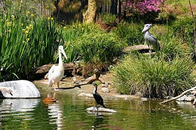 Photograph - Pond Of Birds by Jane Girardot