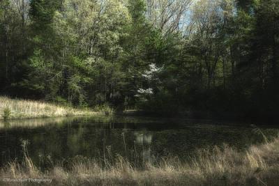 Photograph - Pond Of Dreams by Paul Herrmann