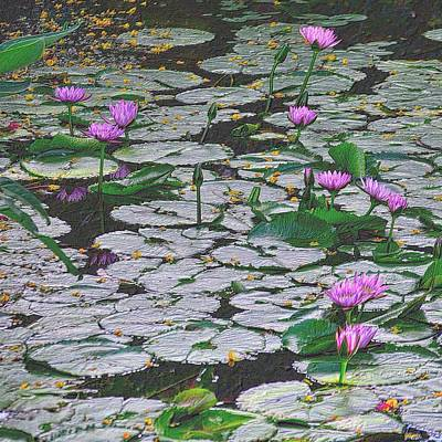Office Plants Drawing - Pond Of Flowers In Colored Pencil by Richard Zentner