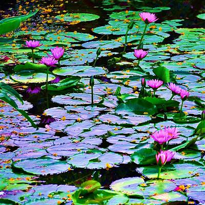 Photograph - Pond Of Flowers by Richard Zentner