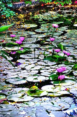 Photograph - Pond Of Water Lilies 2 by Richard Zentner