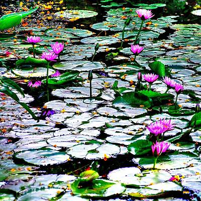 Photograph - Pond Of Water Lilies  by Richard Zentner