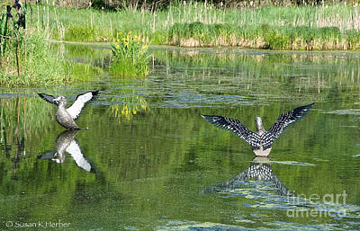 Photograph - Pond Pairs Dancing by Susan Herber