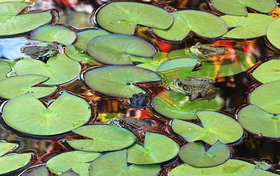 Photograph - Pond Party by Trina  Ansel