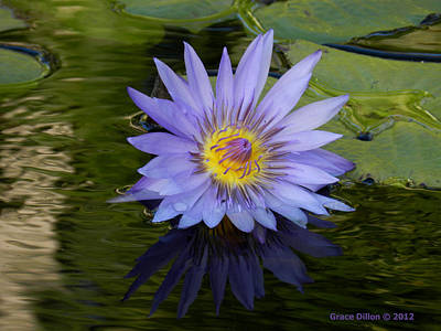 Photograph - Pond Purple  by Grace Dillon