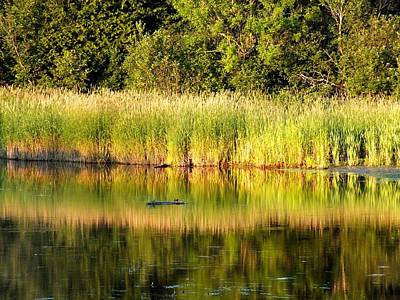 Photograph - Pond Reflected by Gene Cyr