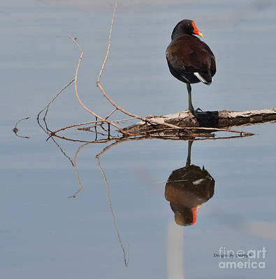 Art Print featuring the photograph Pond Reflection by Debby Pueschel