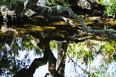 Pond Reflection Art Print