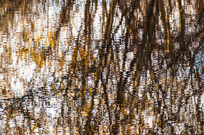Pond Reflections #6 Art Print