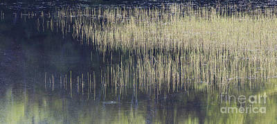 Photograph - Pond Reflections by Alan L Graham