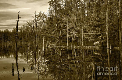 Photograph - Pond Reflections by Debra Fedchin