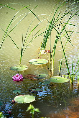 Photograph - Pond  Reflections by Elmer Baez