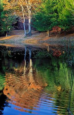 Pond Reflections Art Print by William McEvoy
