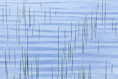 Photograph - Pond Ripples by Alan L Graham