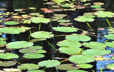 Photograph - Pond Scene by Staci Bigelow