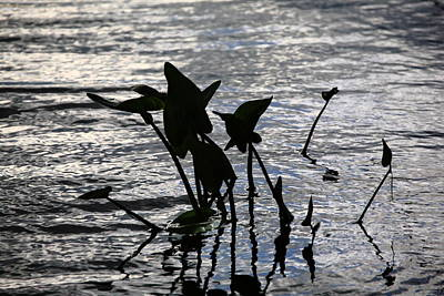 Photograph - Pond Silhouette by Frank Romeo