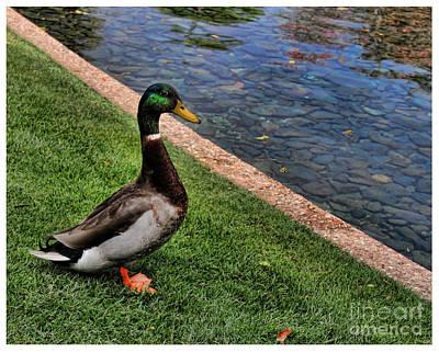 Photograph - Pondering A Swim by Lee Dos Santos