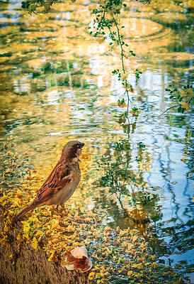 Photograph - Pondering by Diane Wood