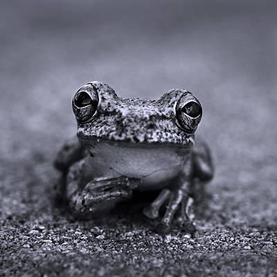 Frogs Photograph - Pondering Frog Bw by Laura Fasulo