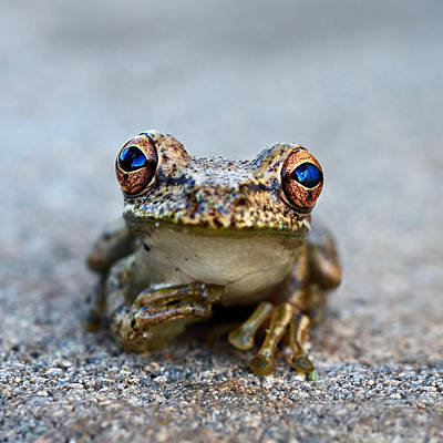 Baby Animal Photograph - Pondering Frog by Laura Fasulo
