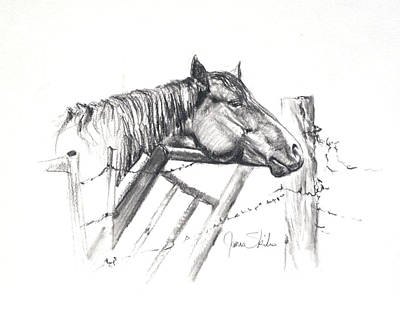 Barbed Wire Fences Drawing - Pondering My Escape by James Skiles