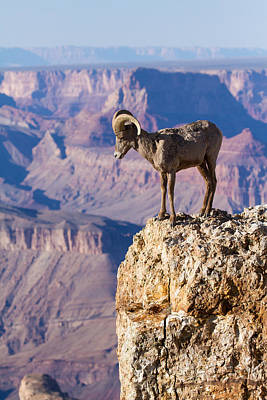 South Kaibab Photograph - Pondering The Abyss  by James Marvin Phelps