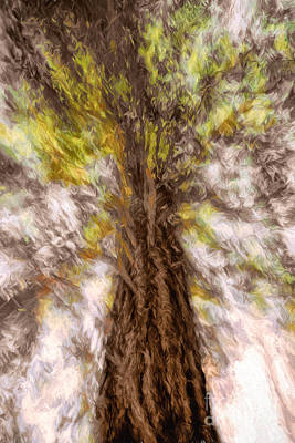 Photograph - Ponderosa Pine Abstract by Marianne Jensen