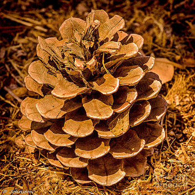 Photograph - Ponderosa Pine Cone by Bob and Nadine Johnston