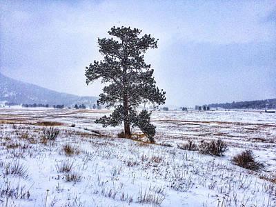 Photograph - Ponderosa Pine by Dan Miller
