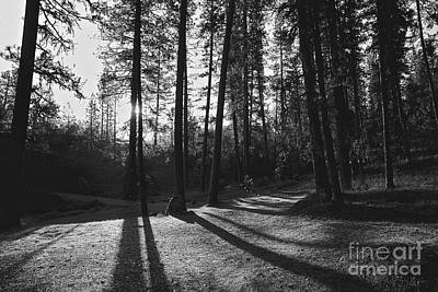 Photograph - Ponderosa Shadows by Lennie Green