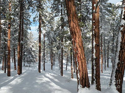 Painting - Ponderosa Winter by Jennifer Lake