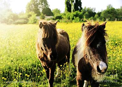 Photograph - Ponies by Deena Otterstetter