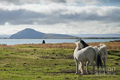 Impressionist Landscapes - Ponies In Iceland Landscape by JM Travel Photography