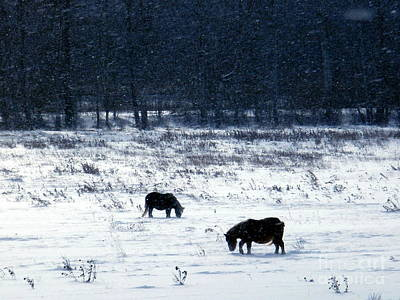 Photograph - Ponies In The Snow by Christian Mattison