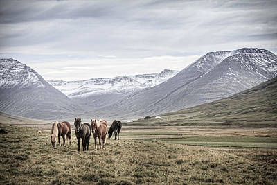 Photograph - Ponies In The Valley by Alexey Stiop