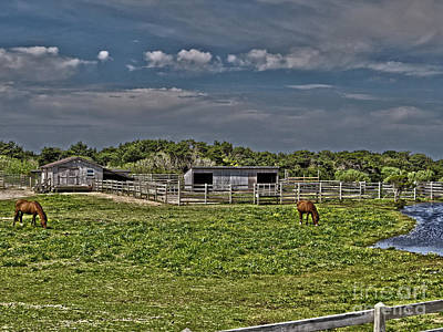 Photograph - Ponies Of Ocracoke by Dawn Gari
