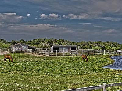 Photograph - Ponies Of Ocracoke by Dawn Gari