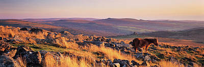 Dartmoor Photograph - Pony At Staple Tor, Dartmoor, Devon by Panoramic Images