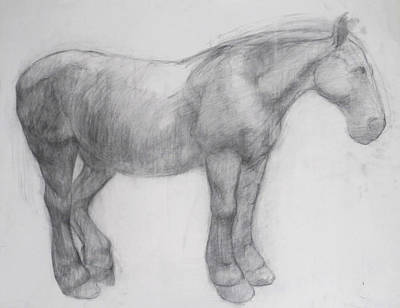 Charcoal Drawing - Pony by Cynthia Harvey