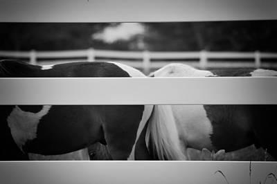 Pony Farm 2011 Art Print by Joseph Duba
