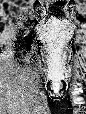 Mixed Media - Pony In B And W by Charles Muhle