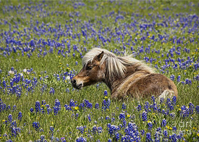 Agriculture Digital Art - Pony In Bluebonnets by Elena Nosyreva