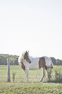 Photograph - Pony Pride by Traci Cottingham