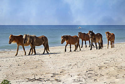 Procession Photograph - Pony Procession  by Betsy Knapp