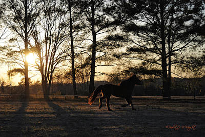 Photograph - Pony's Evening Pasture Trot by Paulette B Wright