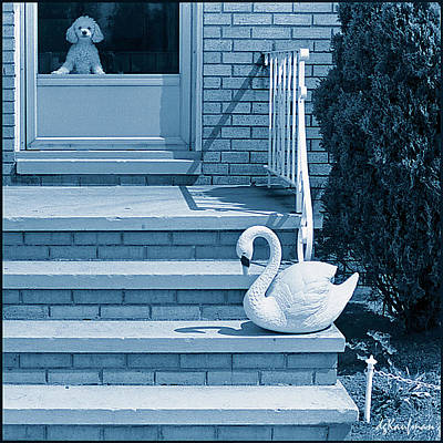 Photograph - Poodle And Swan by Dolores Kaufman