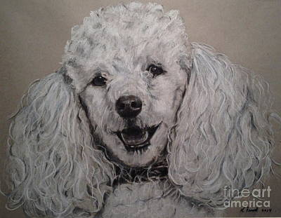 Drawing - Poodle  by Kathy Flood