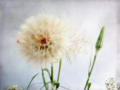 Photograph - Poof by Louise Kumpf